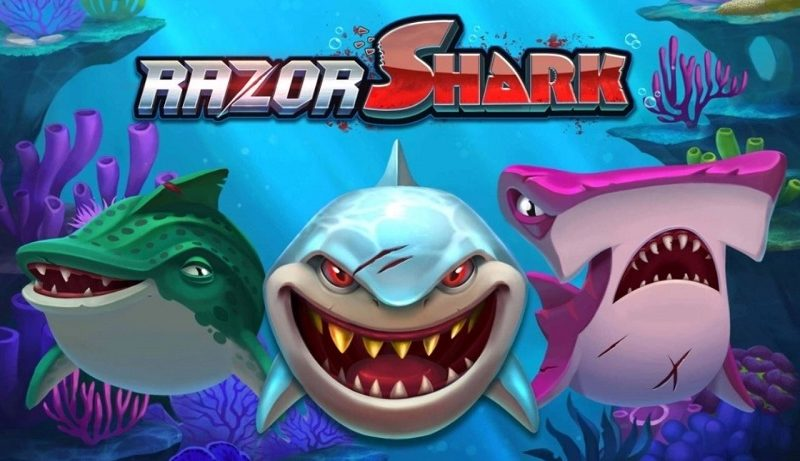 Darum ist Razor Shark auf dem Gipfel
