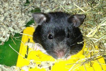 Hamster Maze ist (k)ein reines Kinderspielchen